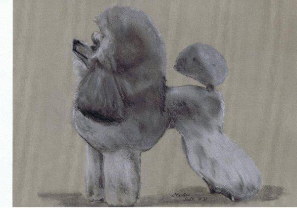 Encore un joli dessin de caniche vraiment bien realise - Caniche dessin ...